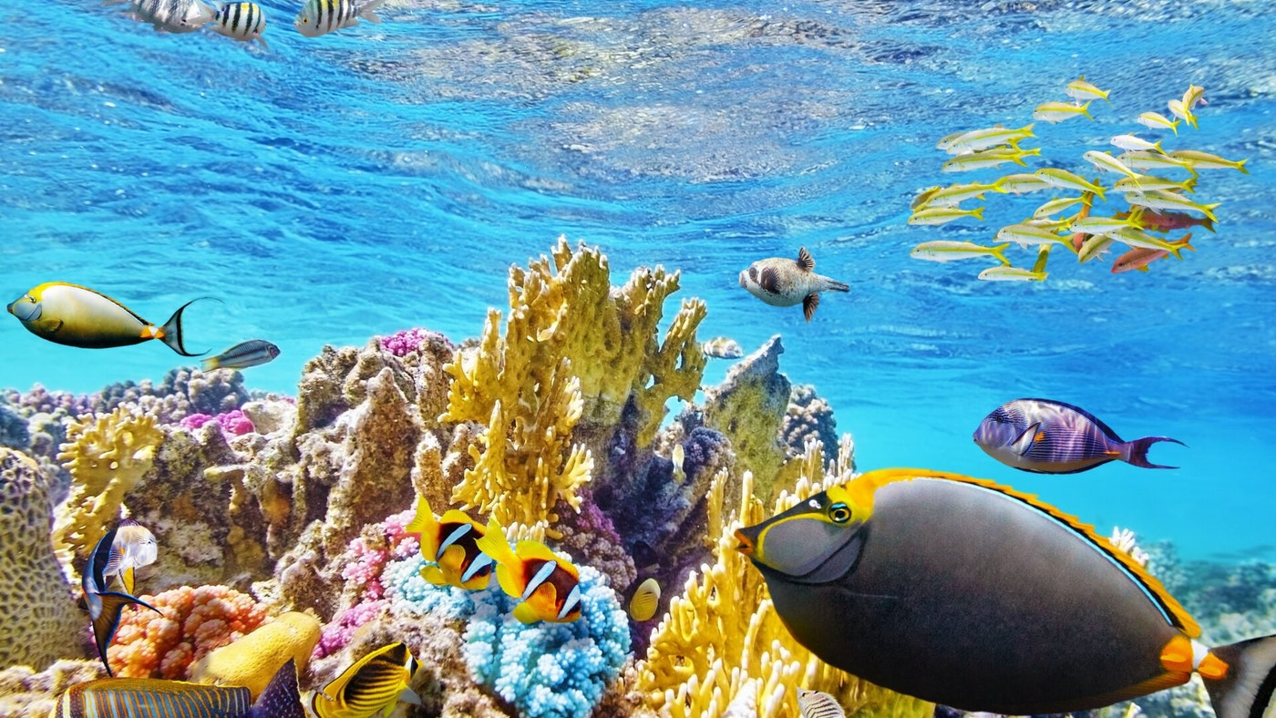 GREAT BARRIER REEF NAMED WORLD'S BEST PLACE TO VISIT IN 2016-2017