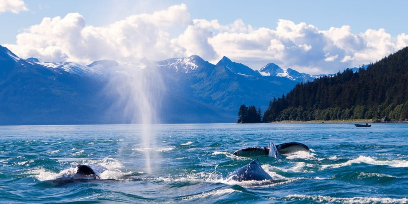 Cruise into the Wilderness of ALASKA Yacht Charters