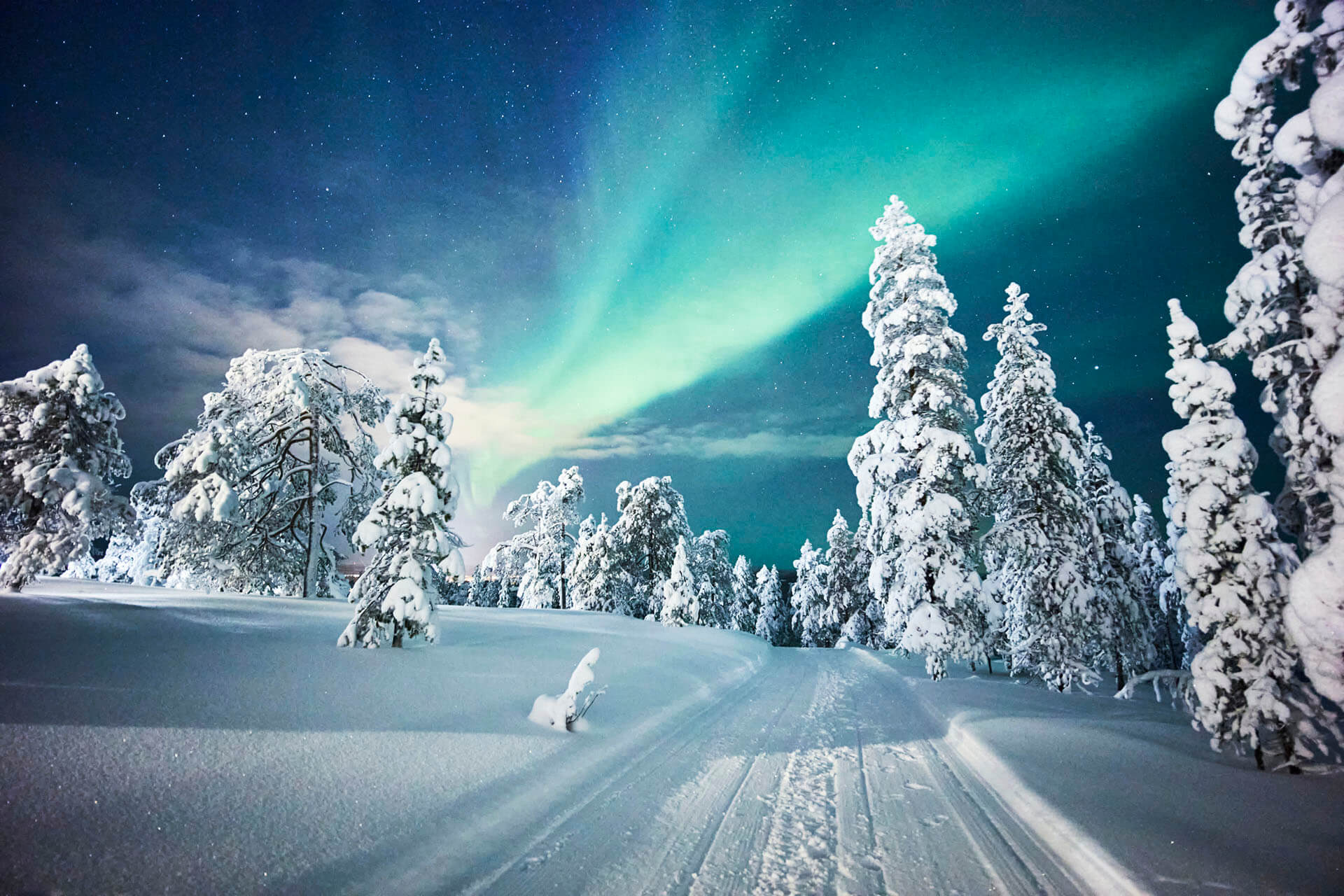 Northern Lights over a Lapland Forest