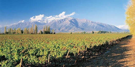 Sip the Finest Wines of South America