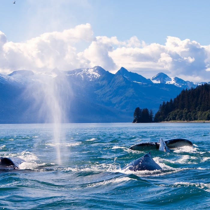 Cruise into the Wilderness of ALASKA